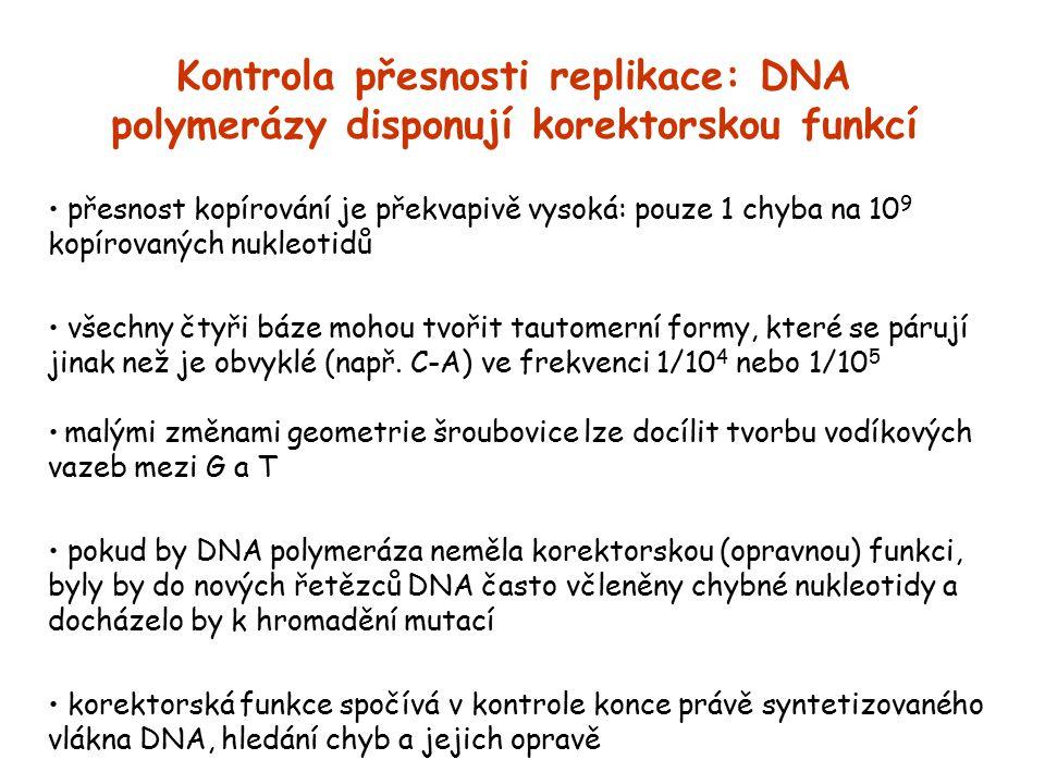 Kontrola přesnosti replikace: DNA polymerázy disponují korektorskou funkcí přesnost kopírování je překvapivě vysoká: pouze 1 chyba na 10 9 kopírovanýc