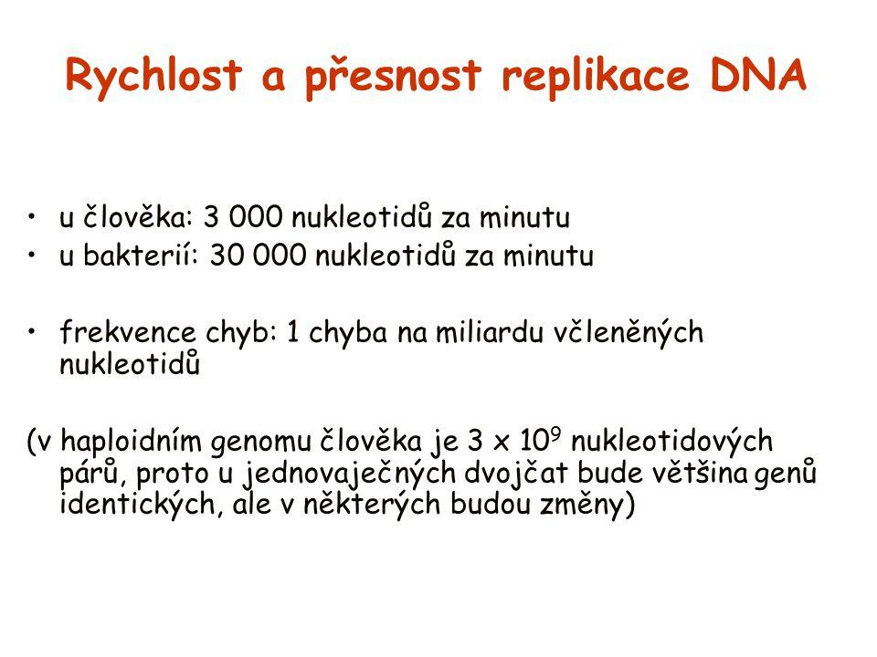 Rychlost a přesnost replikace DNA u člověka: 3 000 nukleotidů za minutu u bakterií: 30 000 nukleotidů za minutu frekvence chyb: 1 chyba na miliardu vč