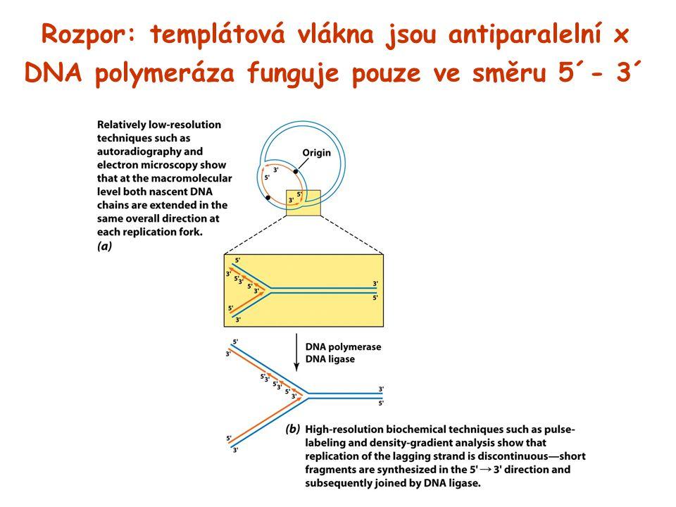 Rozpor: templátová vlákna jsou antiparalelní x DNA polymeráza funguje pouze ve směru 5´- 3´