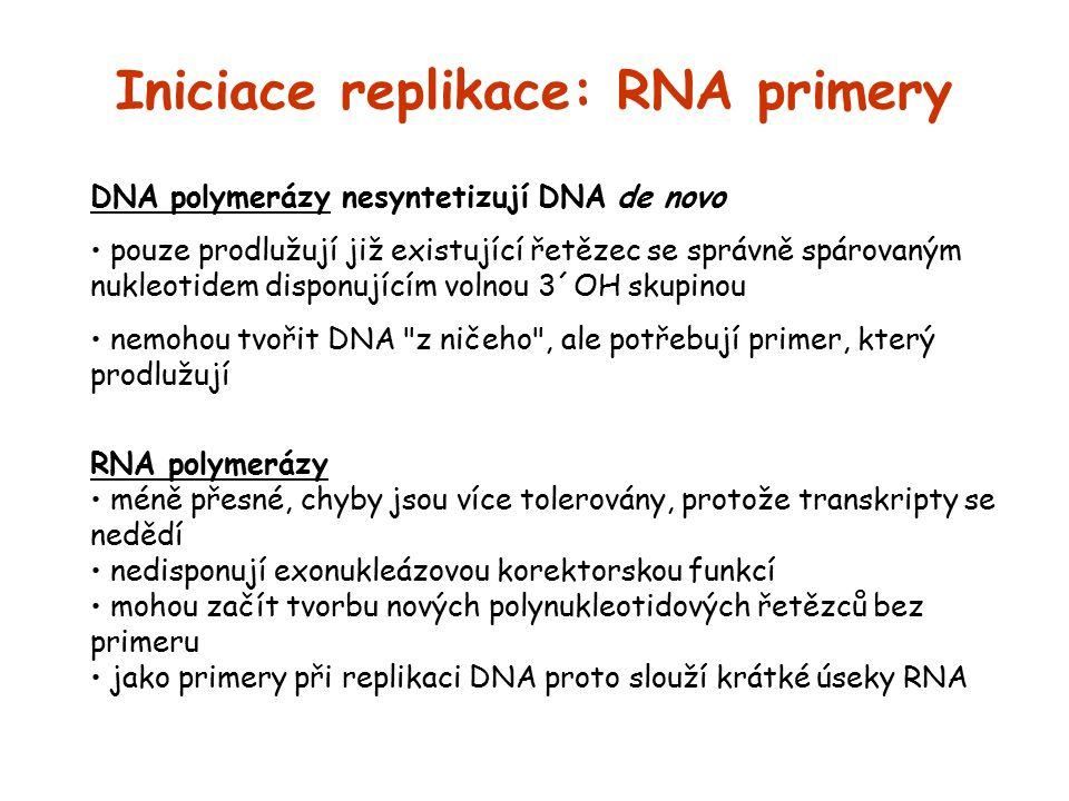 Iniciace replikace: RNA primery DNA polymerázy nesyntetizují DNA de novo pouze prodlužují již existující řetězec se správně spárovaným nukleotidem dis