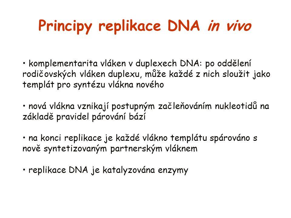 komplementarita vláken v duplexech DNA: po oddělení rodičovských vláken duplexu, může každé z nich sloužit jako templát pro syntézu vlákna nového nová