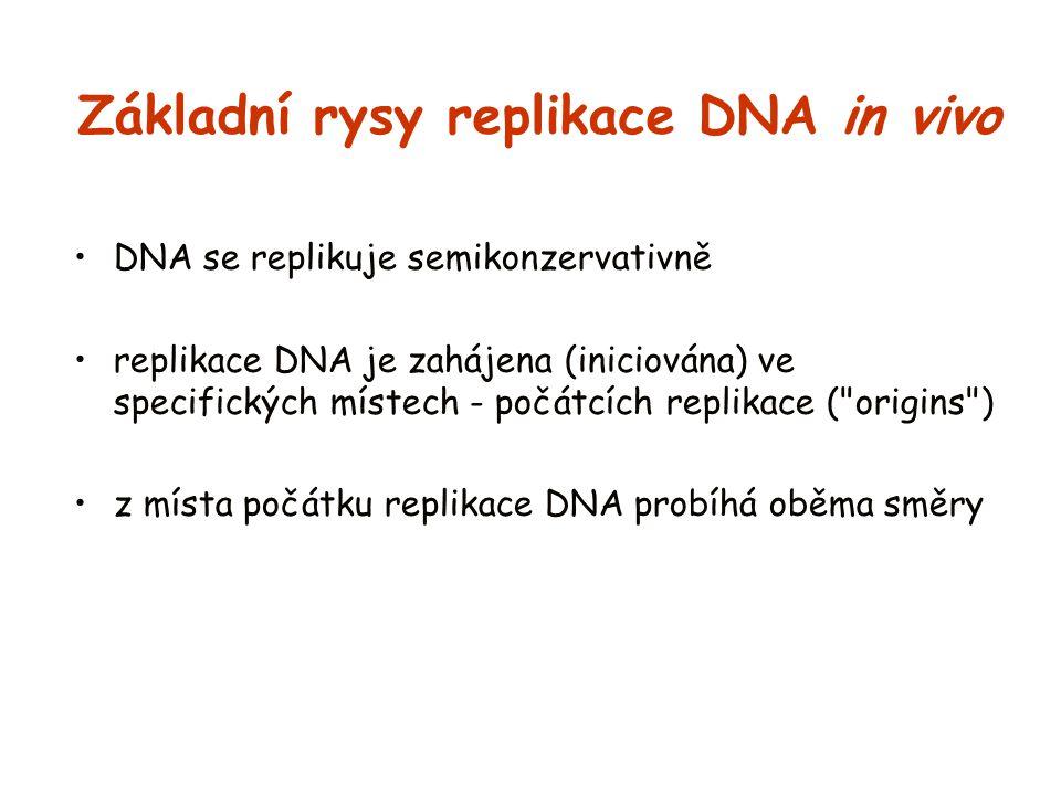 Základní rysy replikace DNA in vivo DNA se replikuje semikonzervativně replikace DNA je zahájena (iniciována) ve specifických místech - počátcích repl