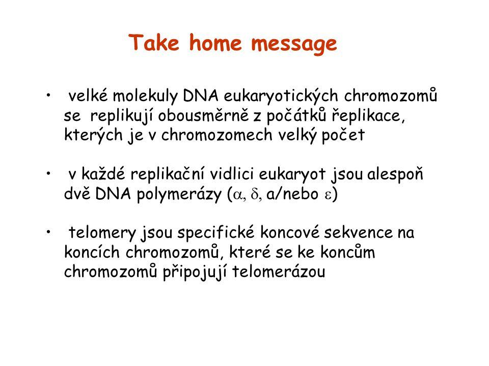 Take home message velké molekuly DNA eukaryotických chromozomů se replikují obousměrně z počátků řeplikace, kterých je v chromozomech velký počet v ka