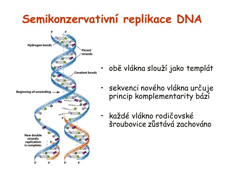 Semikonzervativní replikace DNA obě vlákna slouží jako templát sekvenci nového vlákna určuje princip komplementarity bází každé vlákno rodičovské šrou