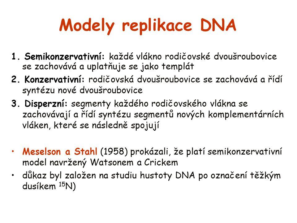 Modely replikace DNA 1. Semikonzervativní: každé vlákno rodičovské dvoušroubovice se zachovává a uplatňuje se jako templát 2. Konzervativní: rodičovsk
