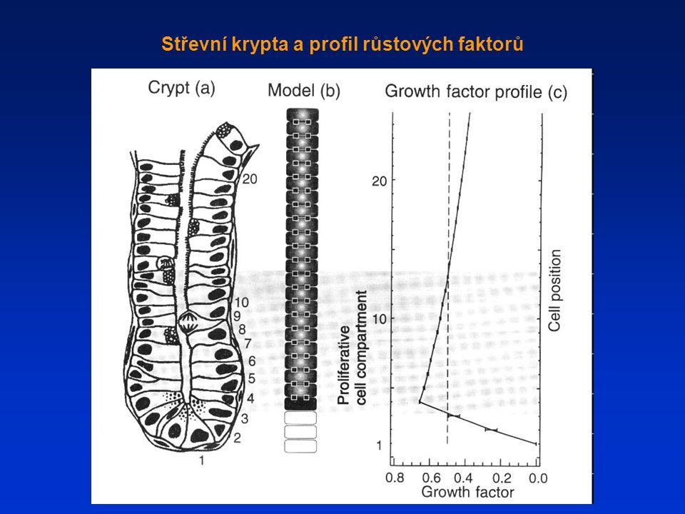 Střevní krypta a profil růstových faktorů