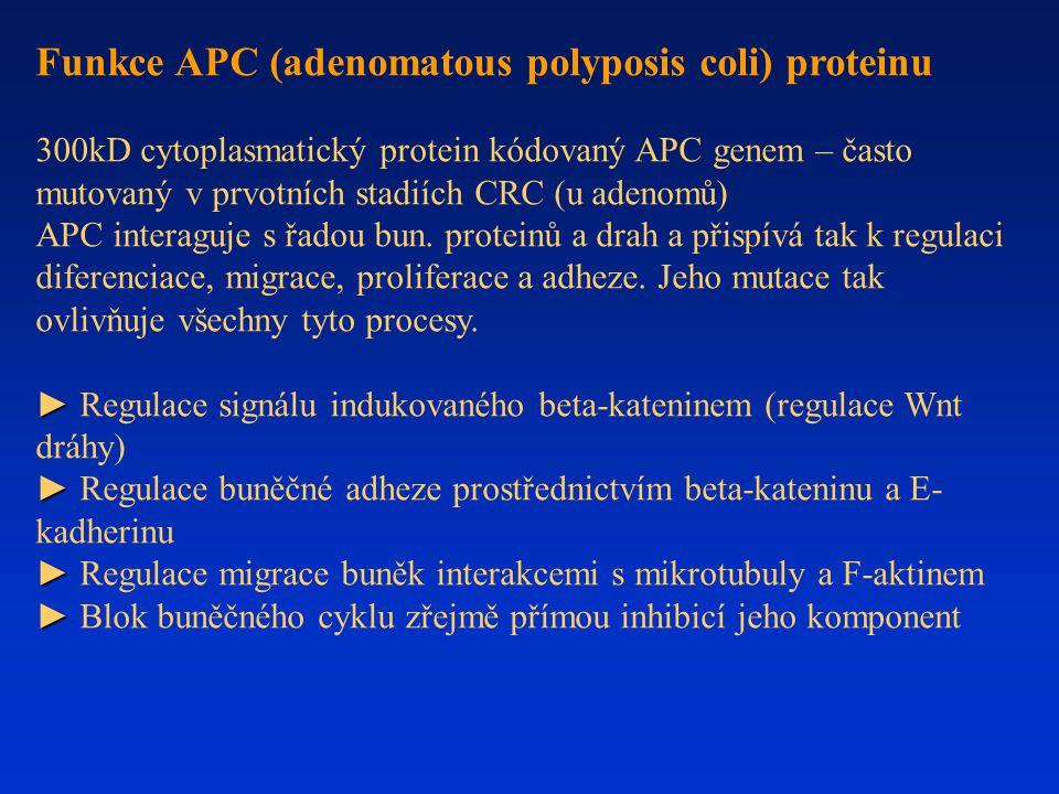 Funkce APC (adenomatous polyposis coli) proteinu 300kD cytoplasmatický protein kódovaný APC genem – často mutovaný v prvotních stadiích CRC (u adenomů
