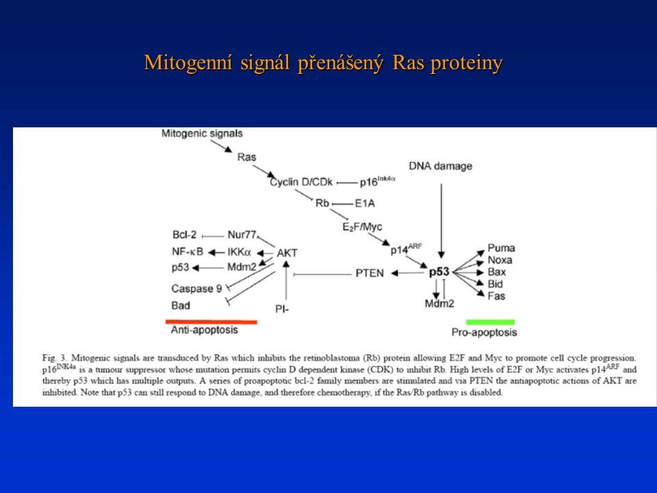 Mitogenní signál přenášený Ras proteiny