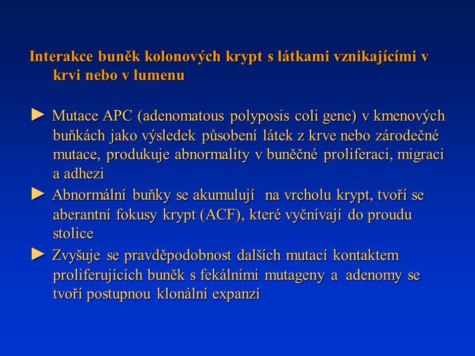Interakce buněk kolonových krypt s látkami vznikajícími v krvi nebo v lumenu ► Mutace APC (adenomatous polyposis coli gene) v kmenových buňkách jako v