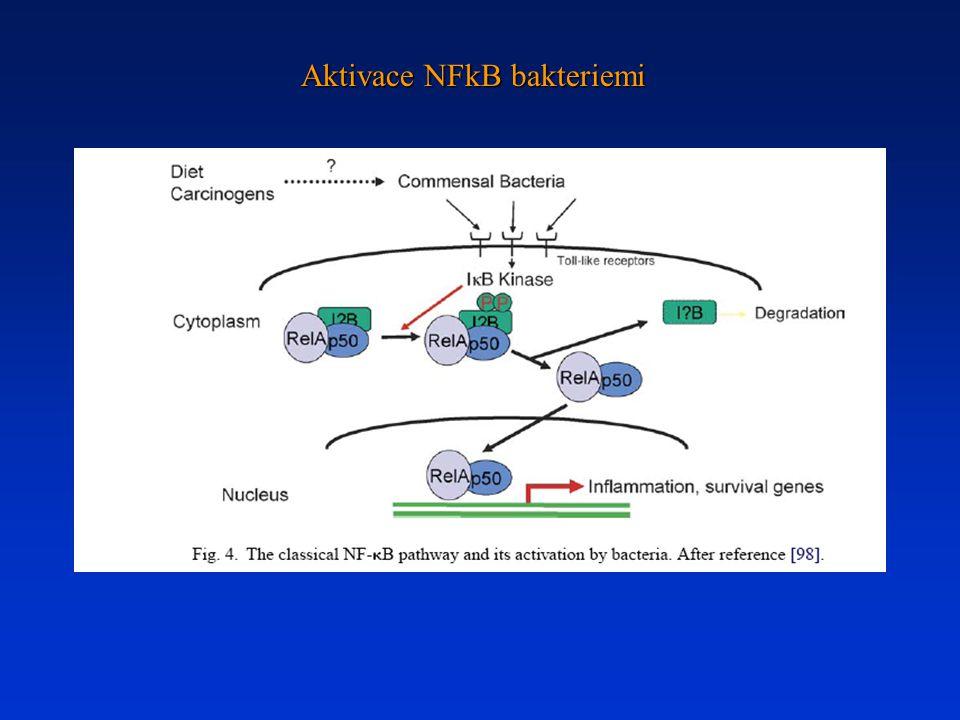Aktivace NFkB bakteriemi