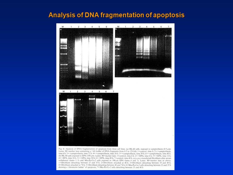 Analysis of DNA fragmentation of apoptosis