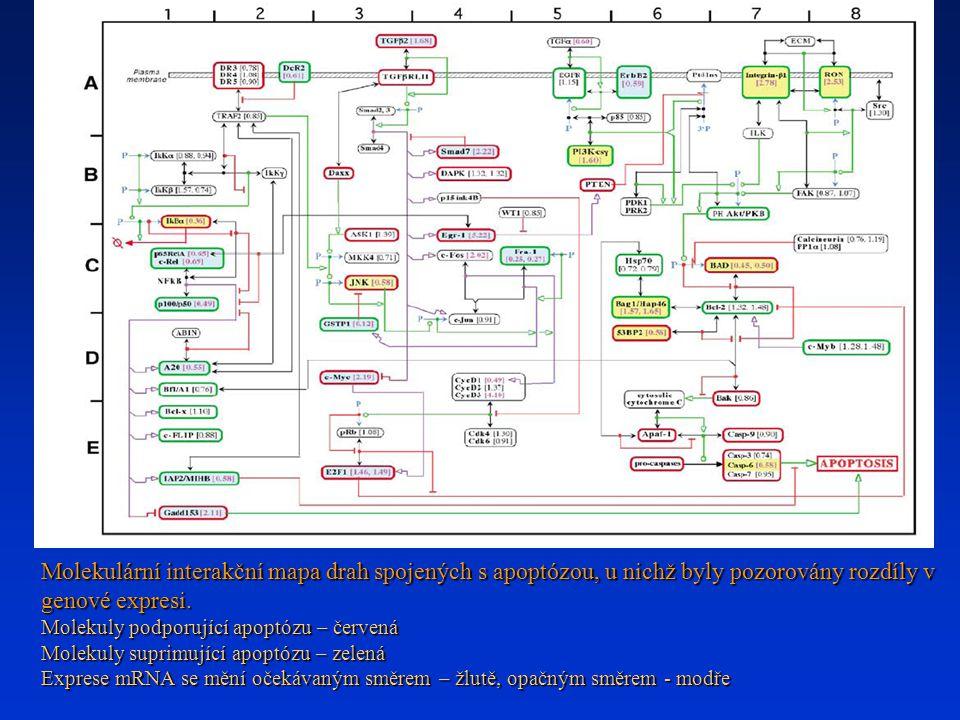 Molekulární interakční mapa drah spojených s apoptózou, u nichž byly pozorovány rozdíly v genové expresi. Molekuly podporující apoptózu – červená Mole