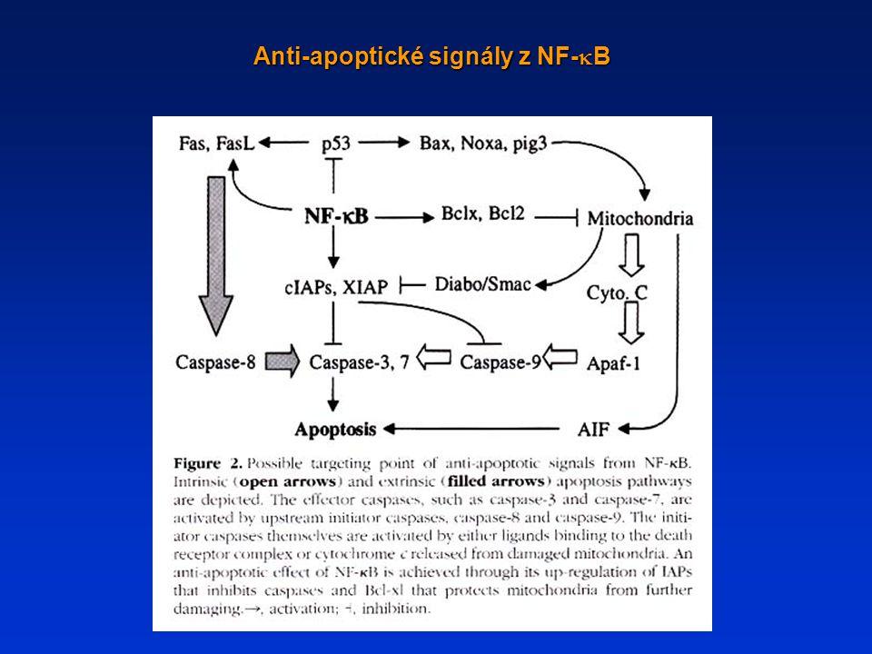 Anti-apoptické signály z NF-  B