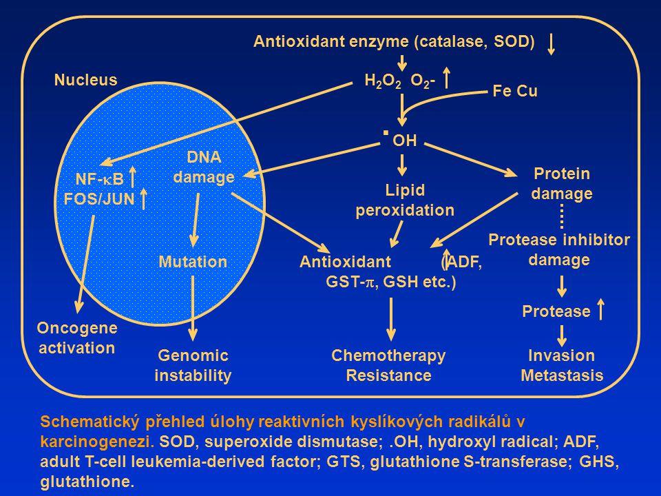 Schematický přehled úlohy reaktivních kyslíkových radikálů v karcinogenezi. SOD, superoxide dismutase;.OH, hydroxyl radical; ADF, adult T-cell leukemi