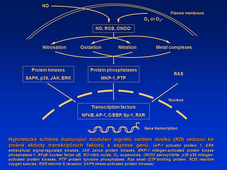 NO Hypotetické schéma ilusturující modulaci signálů oxidem dusíku (NO) vedoucí ke změně aktivity transkripčních faktorů a exprese genů. (AP-1 activato