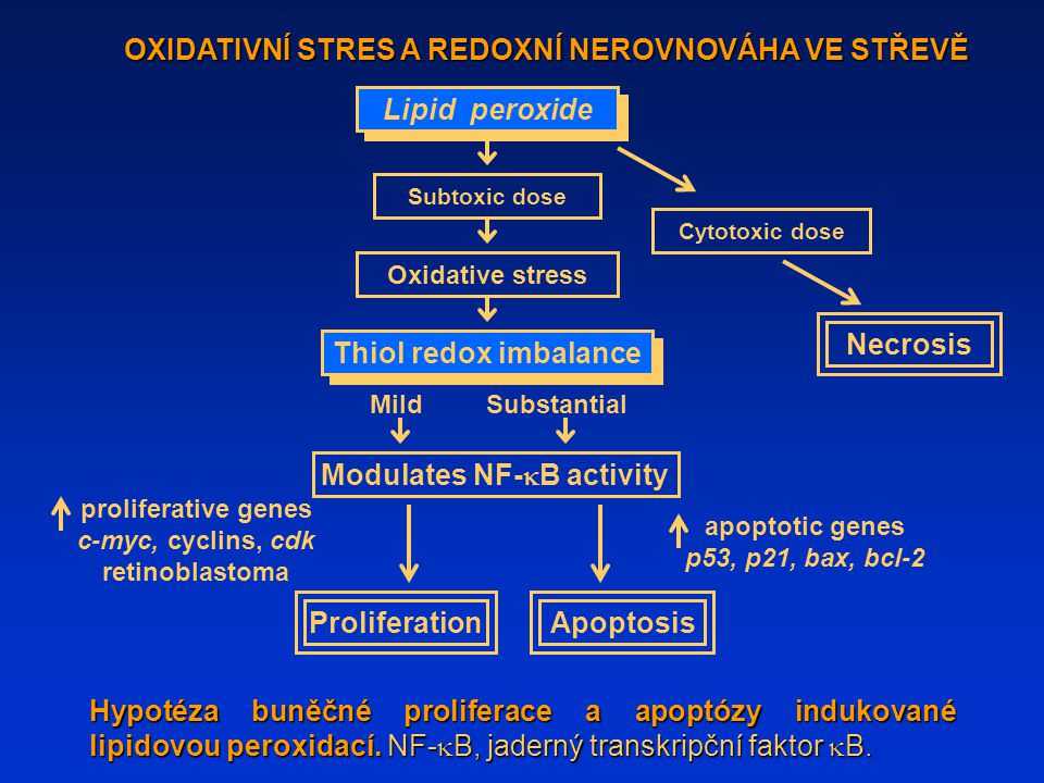 Hypotéza buněčné proliferace a apoptózy indukované lipidovou peroxidací. NF-  B, jaderný transkripční faktor  B. OXIDATIVNÍ STRES A REDOXNÍ NEROVNOV