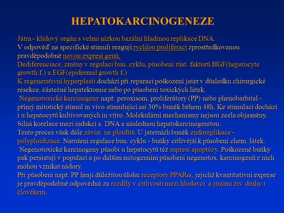 Játra - klidový orgán s velmi nízkou bazální hladinou replikace DNA. V odpověď na specifické stimuli reagují rychlou proliferací zprostředkovanou prav