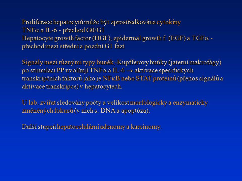 Proliferace hepatocytů může být zprostředkována cytokiny TNF  a IL-6 - přechod G0/G1 Hepatocyte growth factor (HGF), epidermal growth f. (EGF) a TGF