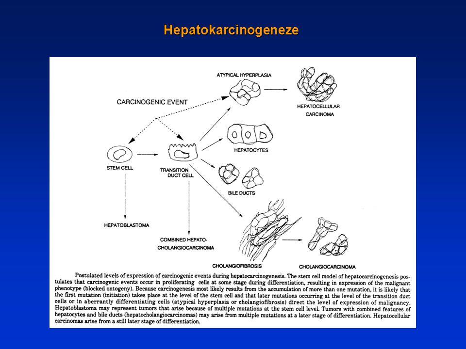 Hepatokarcinogeneze