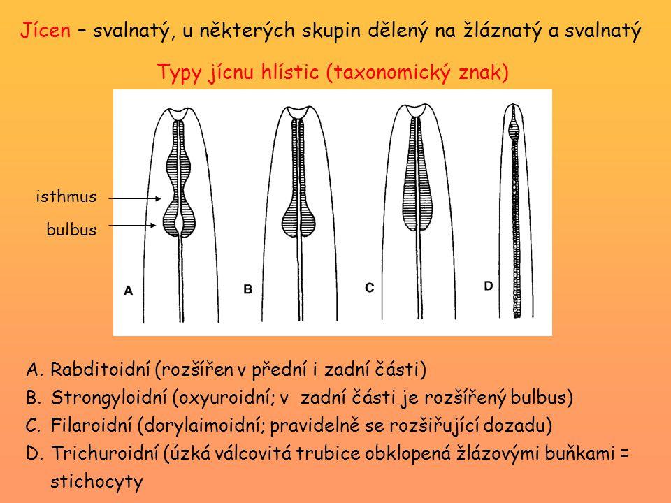 Jícen – svalnatý, u některých skupin dělený na žláznatý a svalnatý A.Rabditoidní (rozšířen v přední i zadní části) B.Strongyloidní (oxyuroidní; v zadní části je rozšířený bulbus) C.Filaroidní (dorylaimoidní; pravidelně se rozšiřující dozadu) D.Trichuroidní (úzká válcovitá trubice obklopená žlázovými buňkami = stichocyty Typy jícnu hlístic (taxonomický znak) isthmus bulbus