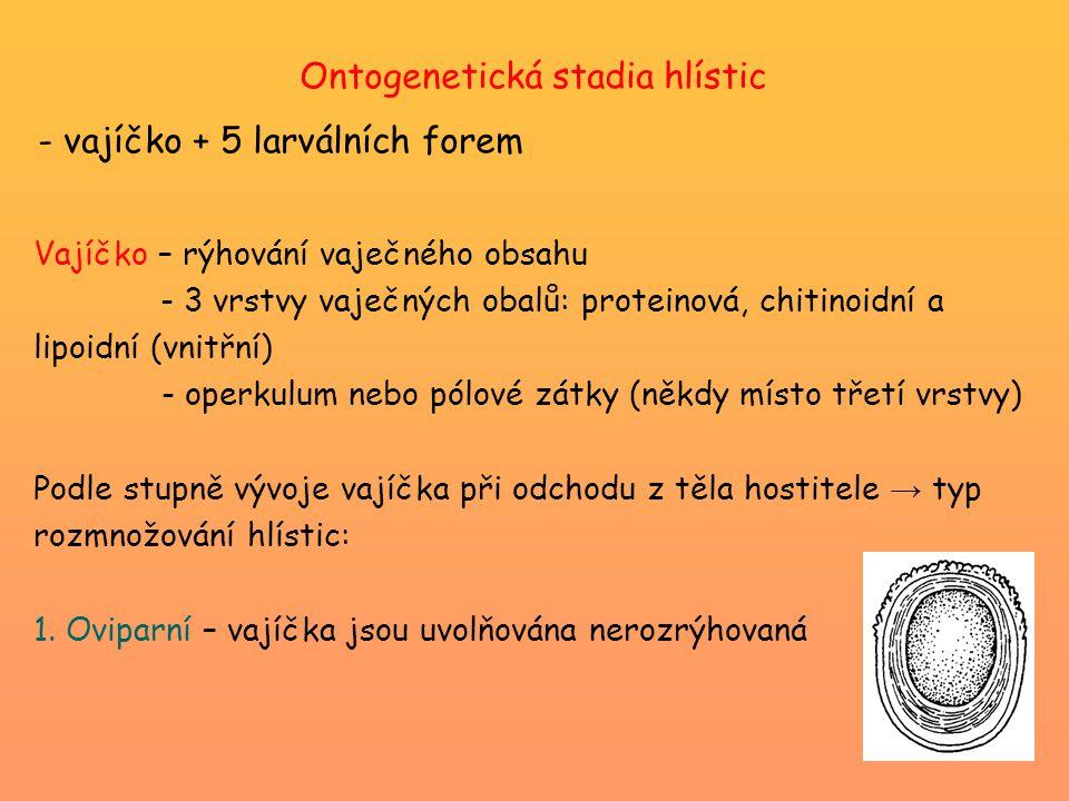 Ontogenetická stadia hlístic - vajíčko + 5 larválních forem Vajíčko – rýhování vaječného obsahu - 3 vrstvy vaječných obalů: proteinová, chitinoidní a lipoidní (vnitřní) - operkulum nebo pólové zátky (někdy místo třetí vrstvy) Podle stupně vývoje vajíčka při odchodu z těla hostitele → typ rozmnožování hlístic: 1.