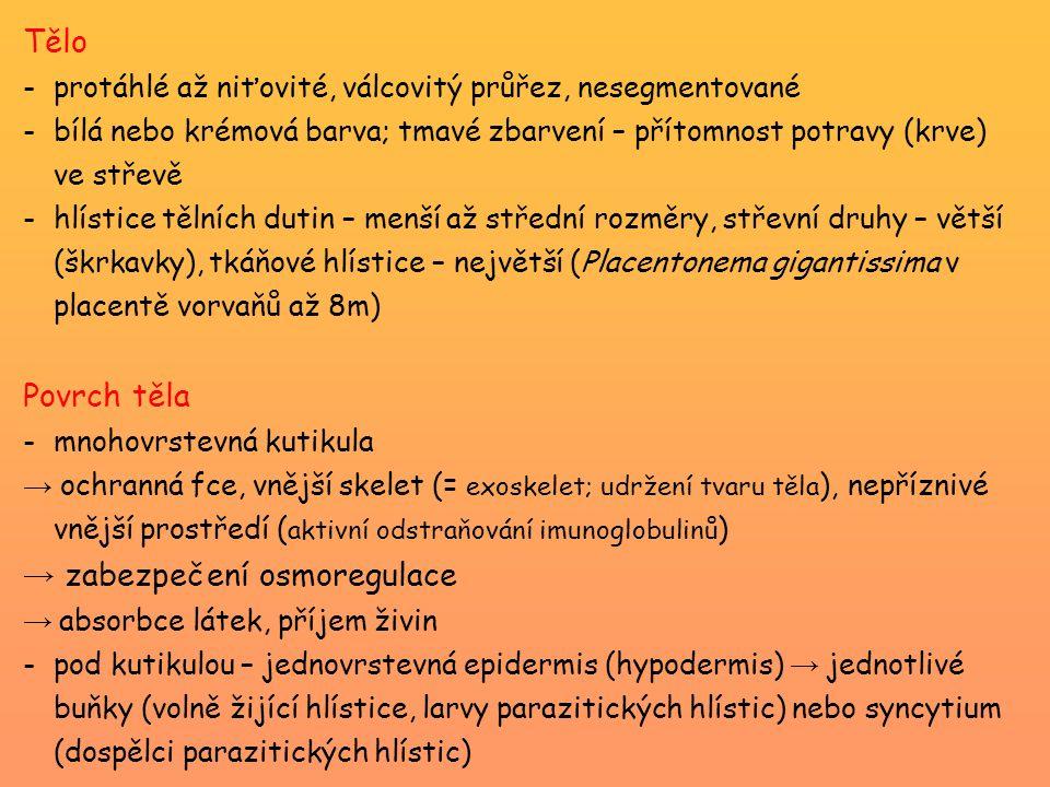 Střední Evropa Trichinella spiralis a T.