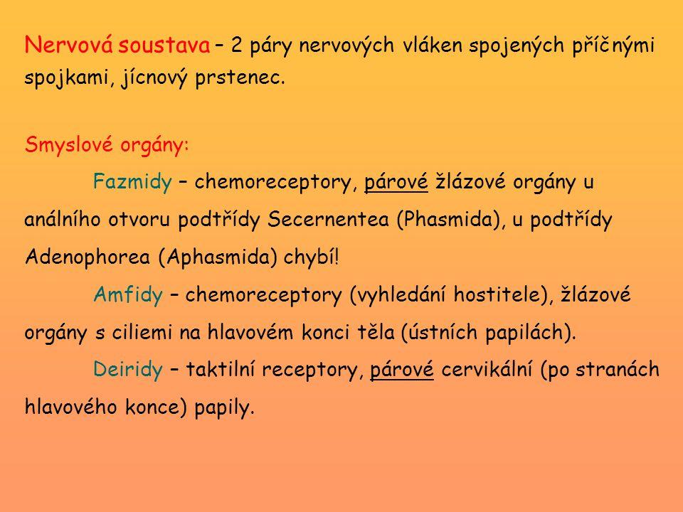 Klinické příznaky: Plicní fáze – verminózní bronchopneumonie (horečky, tvorba hlenu – krvavé sputum + někdy larvy) Střevní fáze – projevy závislé na počtu hlístic (eosinofilie, enteritida, křeče, meteorismus, zvracení, pseudoepileptické záchvaty, neprůchodnost a perforace střeva) Migrace škrkavek do úst a nosu Masivní infekce škrkavkami – uvolnění po podání antihelmintik