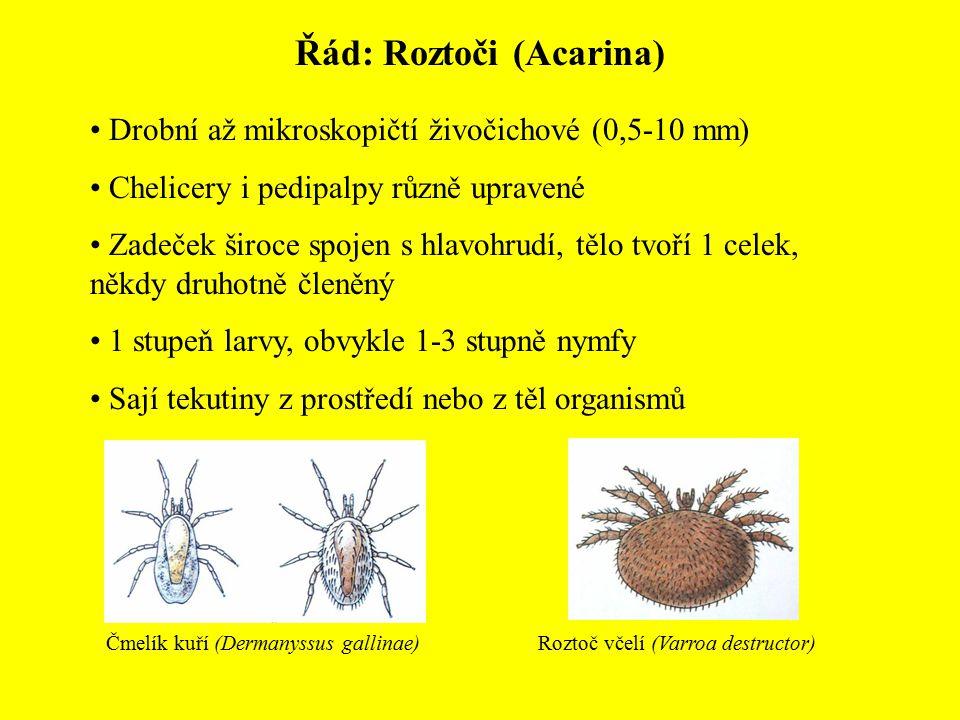 Řád: Roztoči (Acarina) Drobní až mikroskopičtí živočichové (0,5-10 mm) Chelicery i pedipalpy různě upravené Zadeček široce spojen s hlavohrudí, tělo t