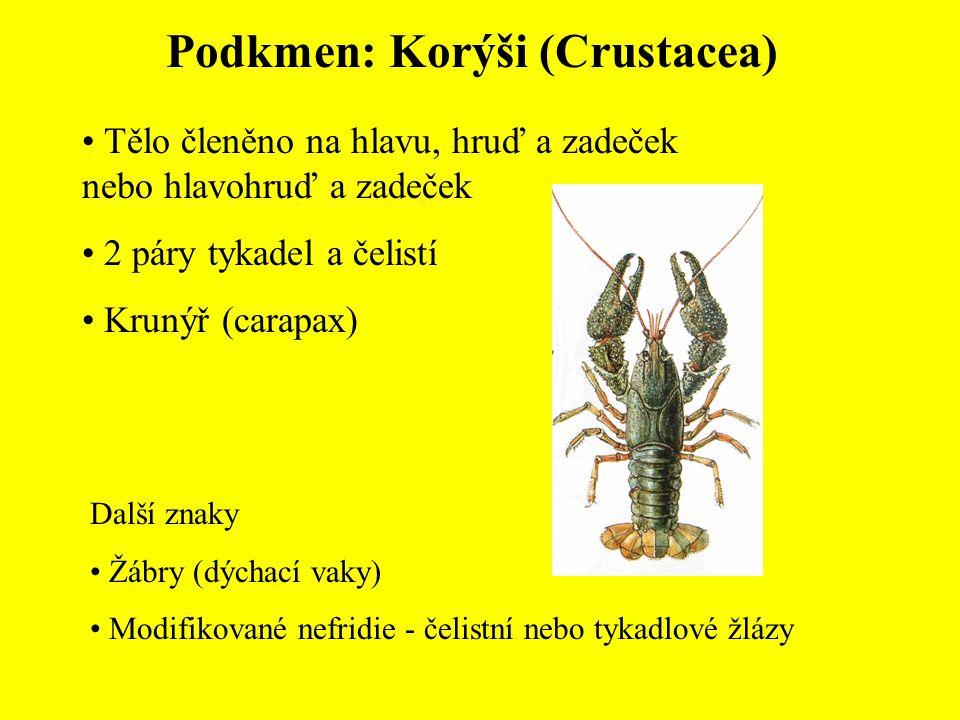 Podkmen: Korýši (Crustacea) Tělo členěno na hlavu, hruď a zadeček nebo hlavohruď a zadeček 2 páry tykadel a čelistí Krunýř (carapax) Další znaky Žábry