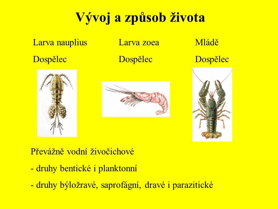 Vývoj a způsob života Larva nauplius Dospělec Larva zoea Dospělec Mládě Dospělec Převážně vodní živočichové - druhy bentické i planktonní - druhy býlo