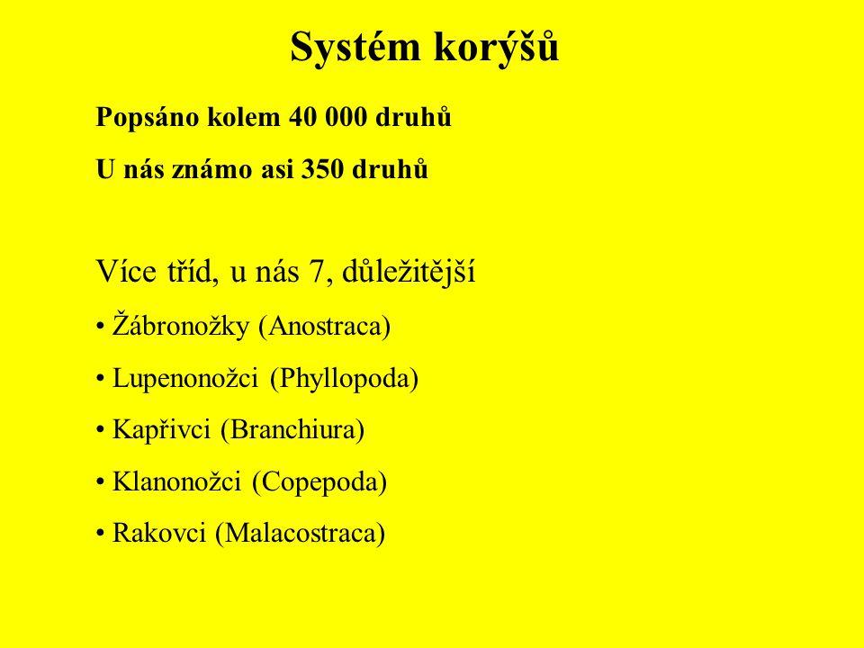 Systém korýšů Popsáno kolem 40 000 druhů U nás známo asi 350 druhů Více tříd, u nás 7, důležitější Žábronožky (Anostraca) Lupenonožci (Phyllopoda) Kap