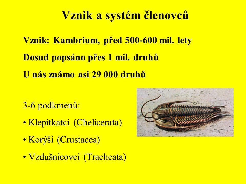 Vznik a systém členovců Vznik: Kambrium, před 500-600 mil. lety Dosud popsáno přes 1 mil. druhů U nás známo asi 29 000 druhů 3-6 podkmenů: Klepítkatci