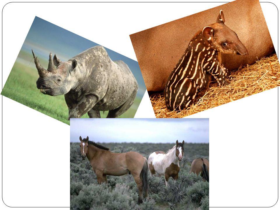 Zajímavosti: Zaříkávači koní Nejmenší a největší kůň Roh nosorožce Nosorožec africký náklaďák Tapír a jeho březost Mládě tapírů