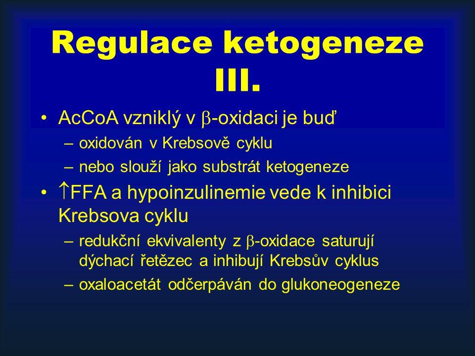Regulace ketogeneze III. AcCoA vzniklý v  -oxidaci je buď –oxidován v Krebsově cyklu –nebo slouží jako substrát ketogeneze  FFA a hypoinzulinemie ve