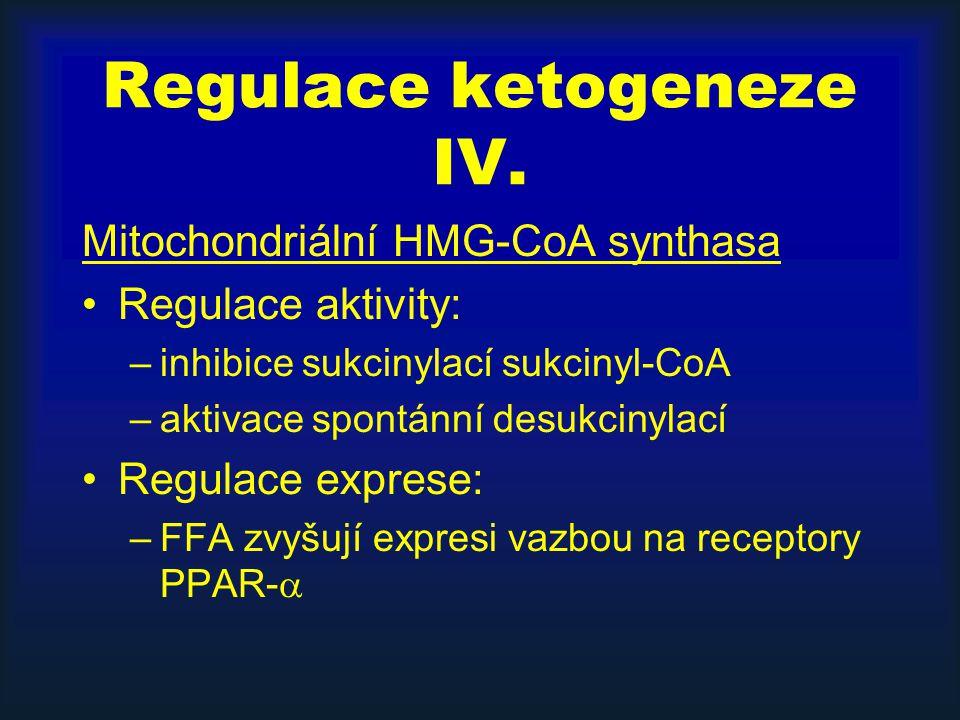 Regulace ketogeneze IV. Mitochondriální HMG-CoA synthasa Regulace aktivity: –inhibice sukcinylací sukcinyl-CoA –aktivace spontánní desukcinylací Regul