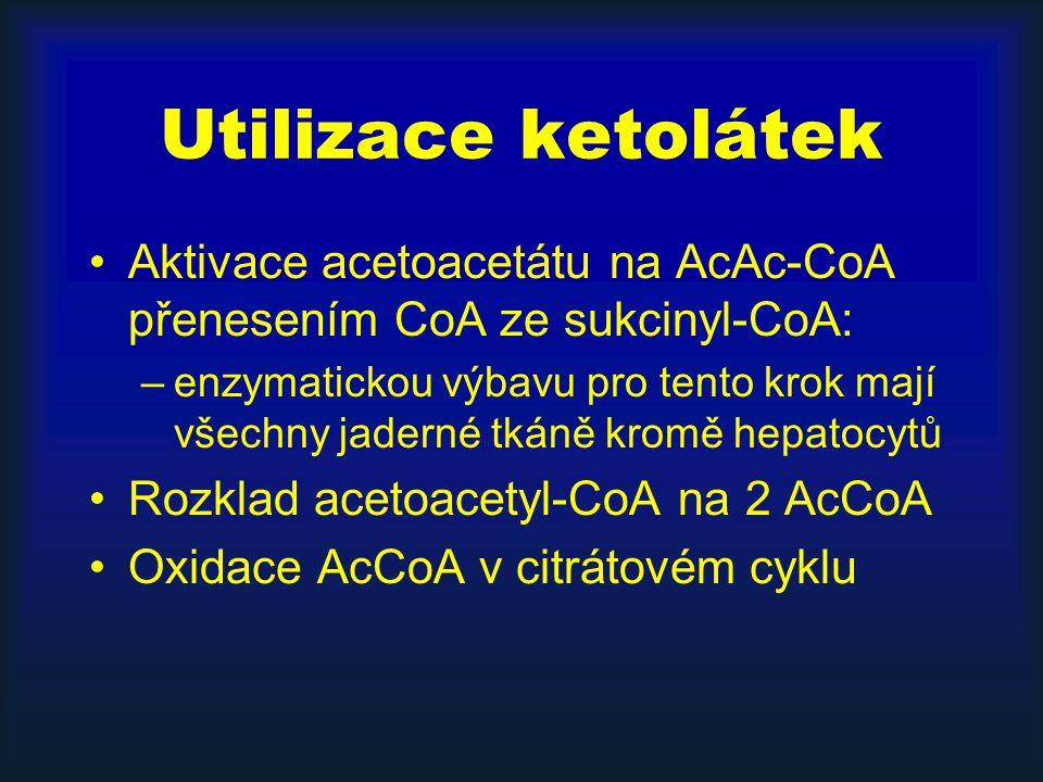 Utilizace ketolátek Aktivace acetoacetátu na AcAc-CoA přenesením CoA ze sukcinyl-CoA: –enzymatickou výbavu pro tento krok mají všechny jaderné tkáně kromě hepatocytů Rozklad acetoacetyl-CoA na 2 AcCoA Oxidace AcCoA v citrátovém cyklu
