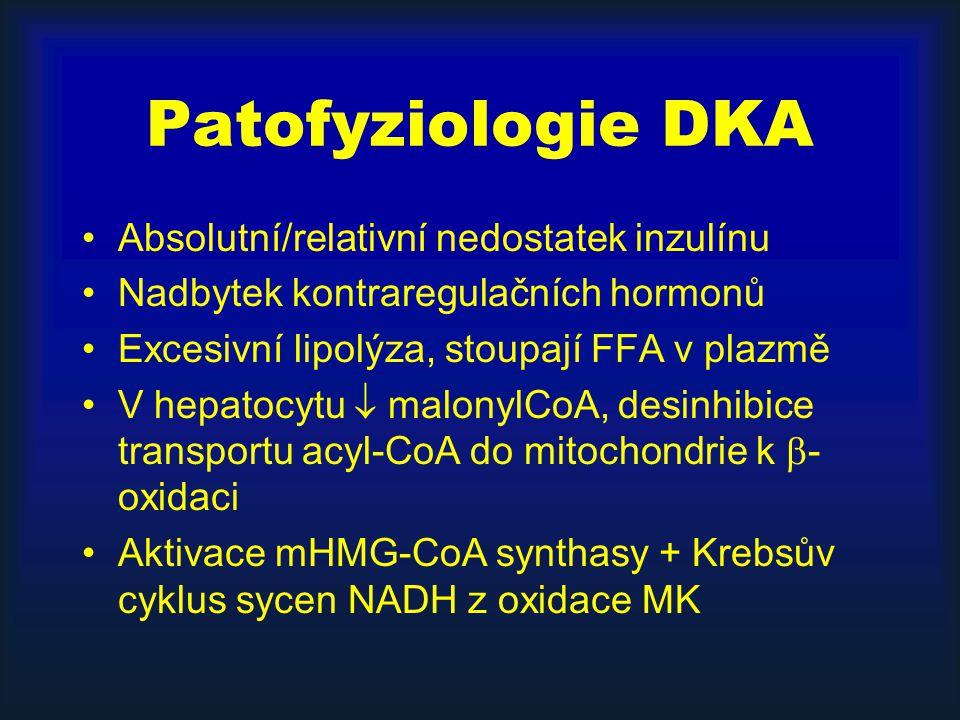 Patofyziologie DKA Absolutní/relativní nedostatek inzulínu Nadbytek kontraregulačních hormonů Excesivní lipolýza, stoupají FFA v plazmě V hepatocytu  malonylCoA, desinhibice transportu acyl-CoA do mitochondrie k  - oxidaci Aktivace mHMG-CoA synthasy + Krebsův cyklus sycen NADH z oxidace MK