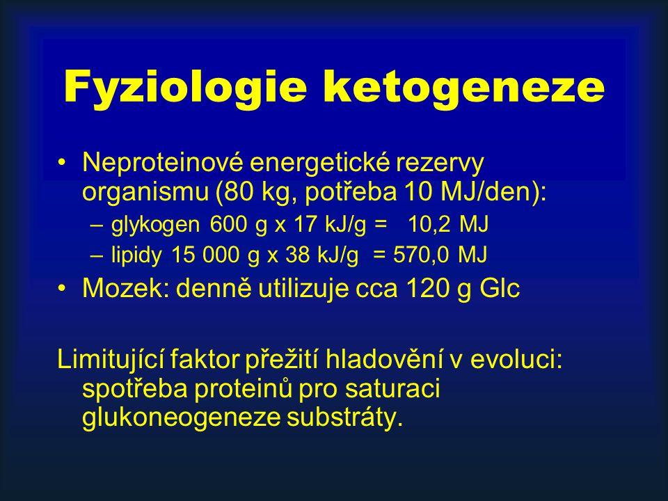 Fyziologie ketogeneze Neproteinové energetické rezervy organismu (80 kg, potřeba 10 MJ/den): –glykogen 600 g x 17 kJ/g = 10,2 MJ –lipidy 15 000 g x 38 kJ/g = 570,0 MJ Mozek: denně utilizuje cca 120 g Glc Limitující faktor přežití hladovění v evoluci: spotřeba proteinů pro saturaci glukoneogeneze substráty.