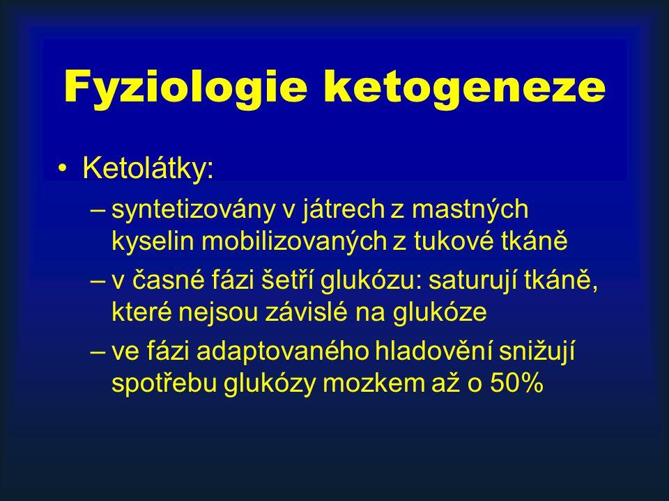Fyziologie ketogeneze Ketolátky: –syntetizovány v játrech z mastných kyselin mobilizovaných z tukové tkáně –v časné fázi šetří glukózu: saturují tkáně, které nejsou závislé na glukóze –ve fázi adaptovaného hladovění snižují spotřebu glukózy mozkem až o 50%