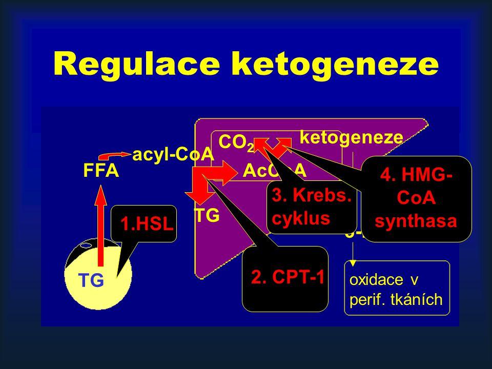Regulace ketogeneze TG FFA acyl-CoA TG AcCoA ketogeneze CO 2 3-HB, AcAc oxidace v perif. tkáních 1.HSL 2. CPT-1 3. Krebs. cyklus 4. HMG- CoA synthasa