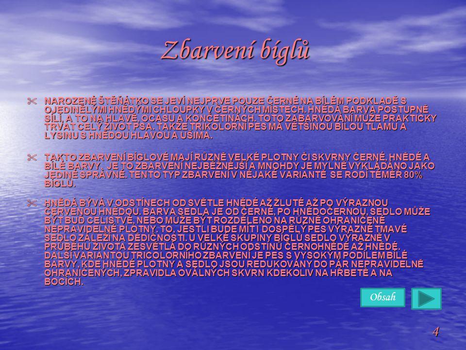 Obsah 4 Zbarvení bíglů  NAROZENÉ ŠTĚŇÁTKO SE JEVÍ NEJPRVE POUZE ČERNÉ NA BÍLÉM PODKLADĚ S OJEDINĚLÝMI HNĚDÝMI CHLOUPKY V ČERNÝCH MÍSTECH. HNĚDÁ BARVA