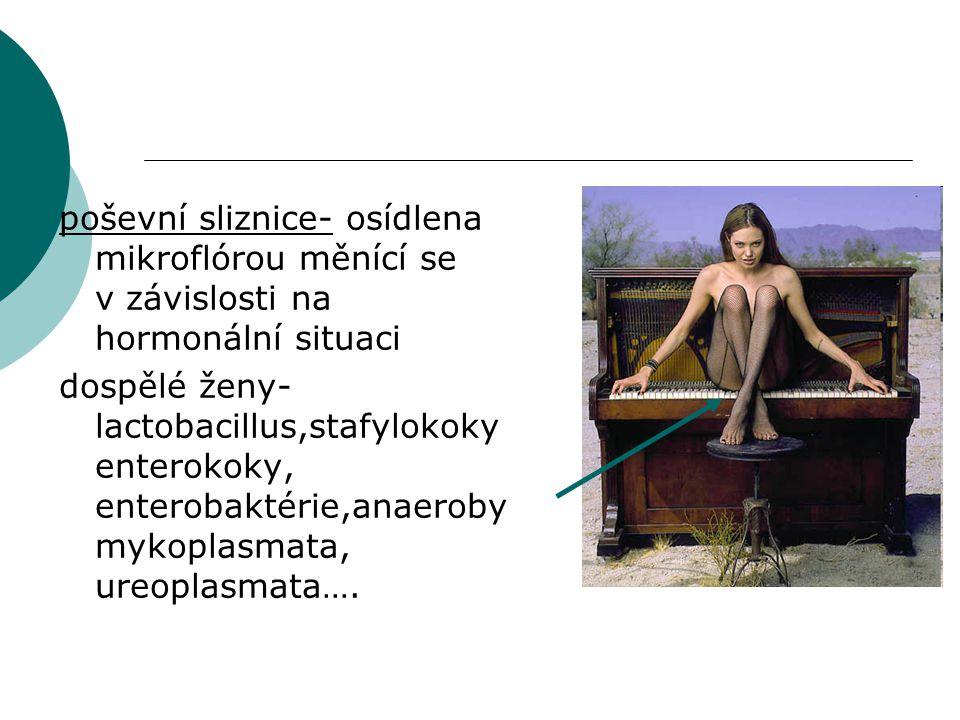 poševní sliznice- osídlena mikroflórou měnící se v závislosti na hormonální situaci dospělé ženy- lactobacillus,stafylokoky enterokoky, enterobaktérie,anaeroby mykoplasmata, ureoplasmata….