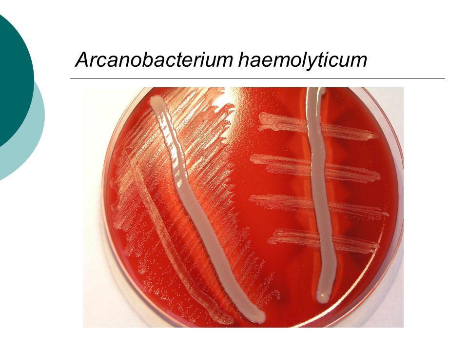  Mykotické infekce dutiny ústní u oslabených pacientů  Gramnegativní mikroby se ve většině případů jako původci infekcí dutiny ústní neuplatňují!!!