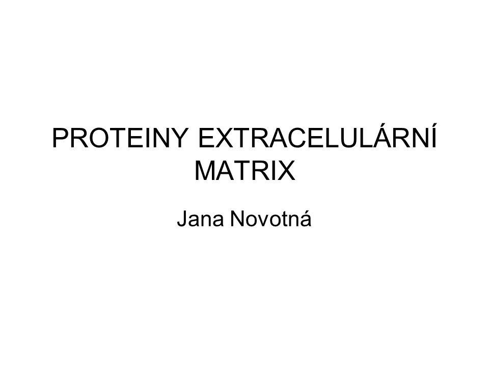 PROTEINY EXTRACELULÁRNÍ MATRIX Jana Novotná