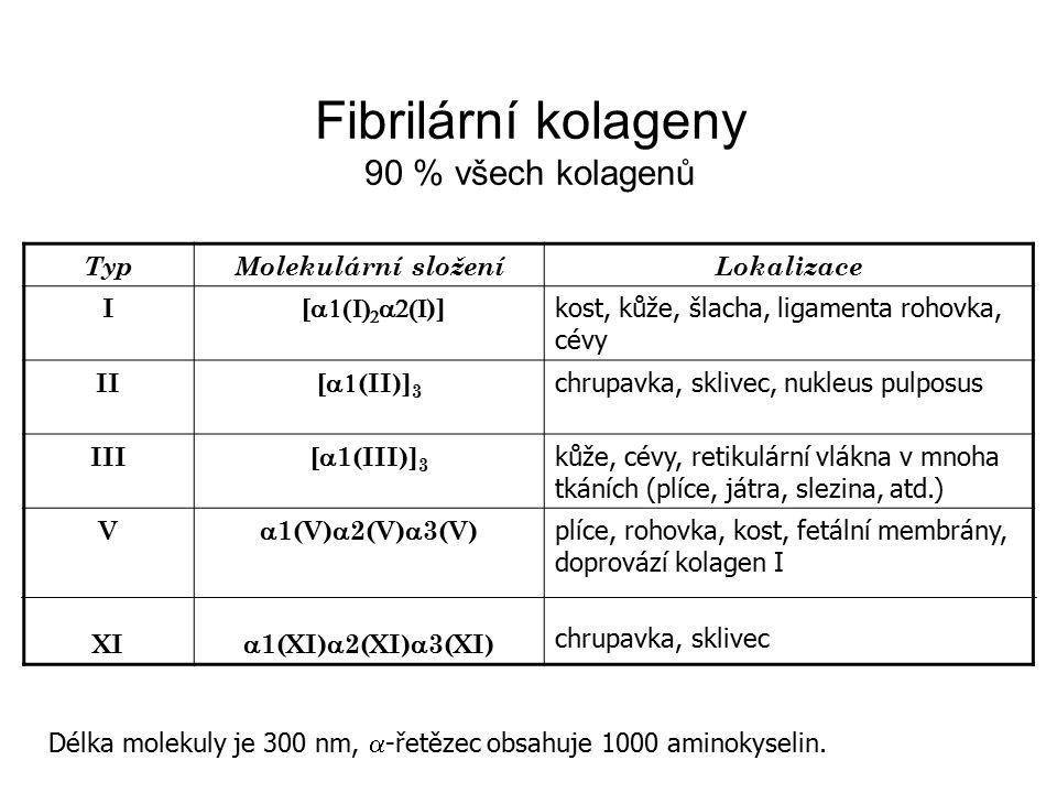 TypMolekulární složeníLokalizace I [    )] kost, kůže, šlacha, ligamenta rohovka, cévy II [  (II)] 3 chrupavka, sklivec, nukleus pulposus