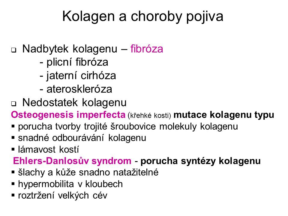Kolagen a choroby pojiva  Nadbytek kolagenu – fibróza - plicní fibróza - jaterní cirhóza - ateroskleróza  Nedostatek kolagenu Osteogenesis imperfect