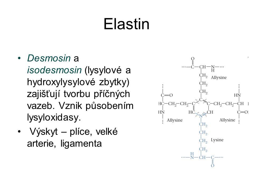 Elastin Desmosin a isodesmosin (lysylové a hydroxylysylové zbytky) zajišťují tvorbu příčných vazeb. Vznik působením lysyloxidasy. Výskyt – plíce, velk