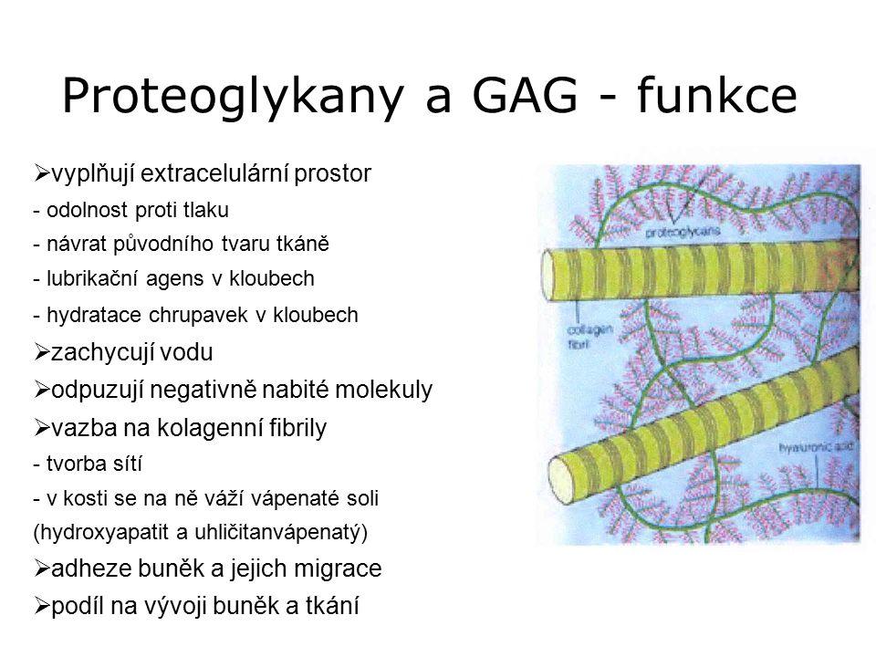 Proteoglykany a GAG - funkce  vyplňují extracelulární prostor - odolnost proti tlaku - návrat původního tvaru tkáně - lubrikační agens v kloubech - h