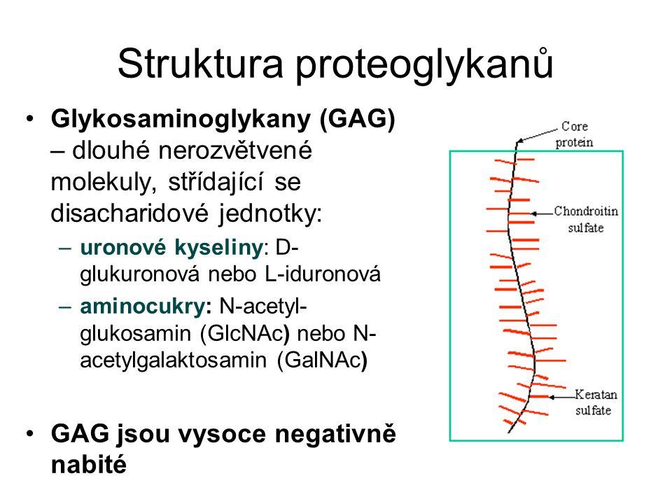 Struktura proteoglykanů Glykosaminoglykany (GAG) – dlouhé nerozvětvené molekuly, střídající se disacharidové jednotky: –uronové kyseliny: D- glukurono