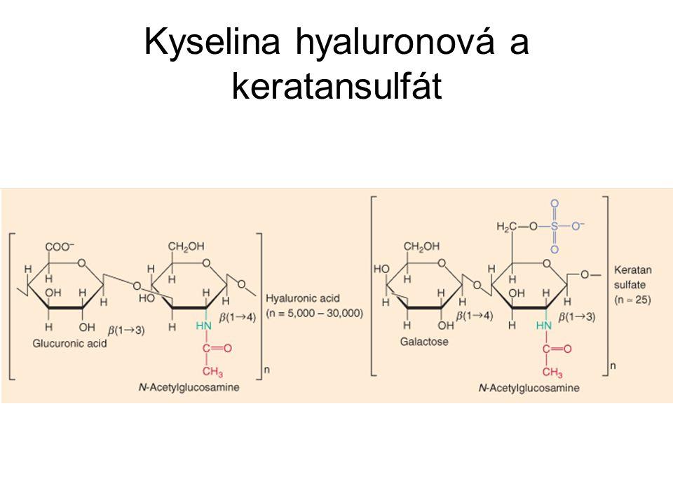 Kyselina hyaluronová a keratansulfát
